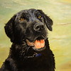 """Danny"" (oil on canvas) by Helen James"