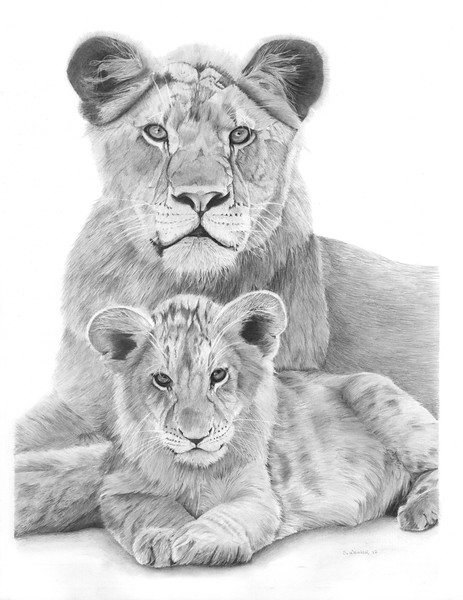 """Lion Sisters"" (graphite) by Sandra Weiner"