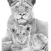 """Lion Sisters"" (graphite) by Sandra Weiner"