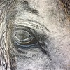 """The Grey"" (oil on canvas) by Crista Bromley"