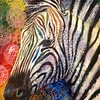 """Zebra in Color"" (mixed media/acrylic) by Michele Walter"
