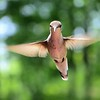 """Hummer in Flight"" (photography) by Kathy Brady"