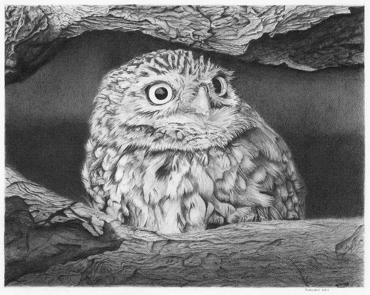 """On The Lookout"" (graphite) by Sandra Weiner"