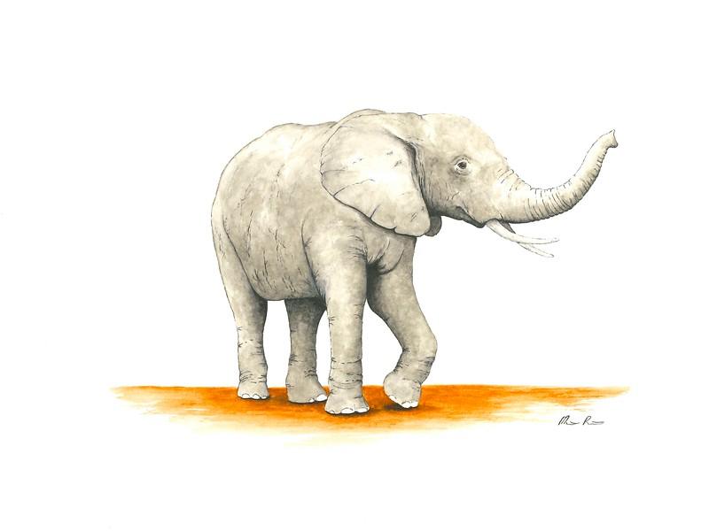 """Elephant"" (pen and watercolor) by Matt Pricken"
