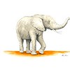 """Elephant"" (pen and watercolor) by Matt Pricken"
