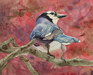 """Jay in the Japanese Maple"" (watercolor) by Sonja Jones"