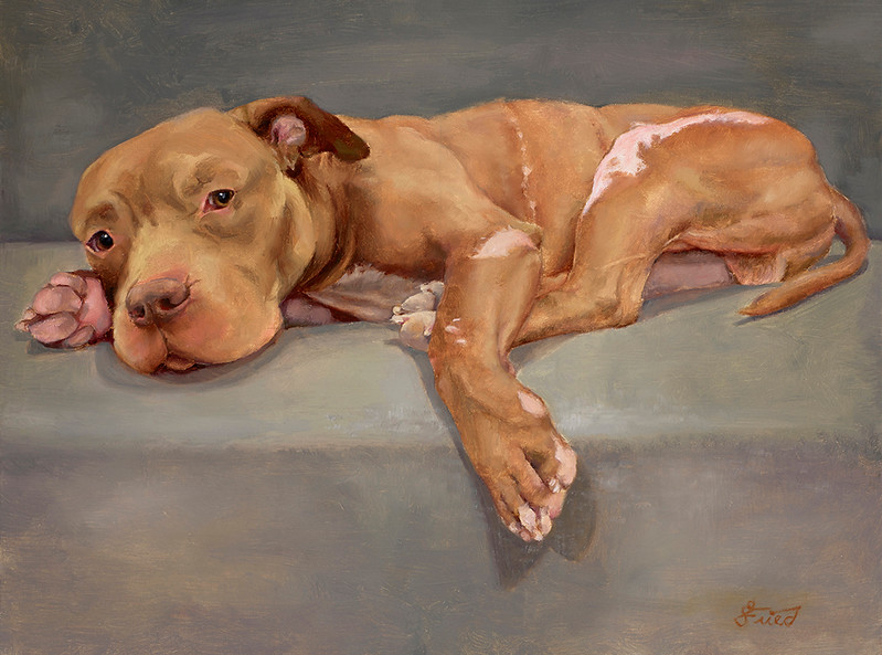 """Indy"" (oil on linen) by Samantha Fried"