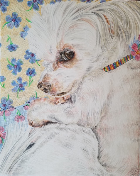 """""""Morgan"""" (colored pencil) by Jennifer Carberry-Landis"""