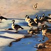 """Geese on Frozen Pond"" (oil on canvas) by Mitra Devon"