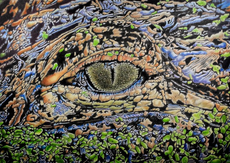 """Gator Eyed"" (colored pencil) by John Guiseppi"