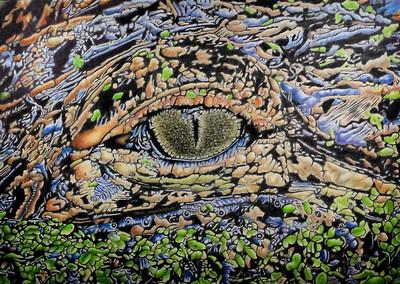 """""""Gator Eyed"""" (colored pencil) by John Guiseppi"""