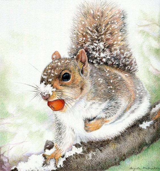 """Squirrel in Winter"" (colored pencil) by Angela Matuschka"