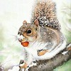 """Squirrel in Winter"" (colored pencil) by Angela Matuschka"