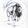 """Cushing's Syndrome Buffalo"" (ink) by Stephanie Cohen"