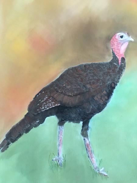"""Turkey"" (pastel) by Barbara Gulotta"