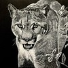 """Eyes on the prize"" (scratchboard) by James Hoch"