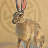 """Tolai Hare, Mongolia"" (oil) by Susan Fox"