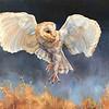 """Night Flight"" (oil on wood panel) by Samantha Fried"