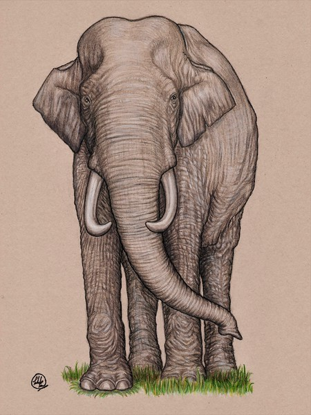 """""""The Guardian"""" (mixed media - ink, colored pencil) by Lokesh Coomar"""