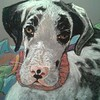 """Rainbow Bridge - Barb's Dane"" (pastel) by Darleen Urbanek"