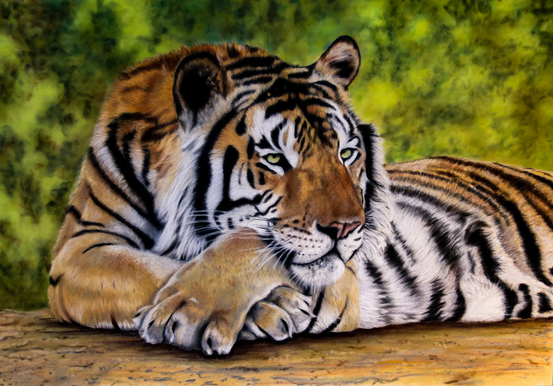 """""""Chillin"""" (pastel on velour) by Holly Cannon"""