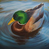 """Ducky"" (oil) by Sarah Hansen"