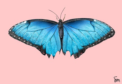"""Blue Morpho"" (digital) by Simon Cantor"