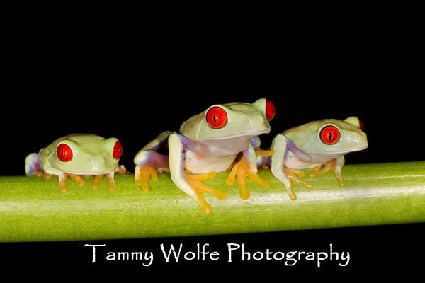Animals - Amphibians