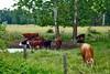 cows mi bm 7-14_013p