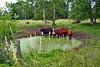 cows mi bm 7-14_021p