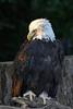 Eagle zoo_004msc2