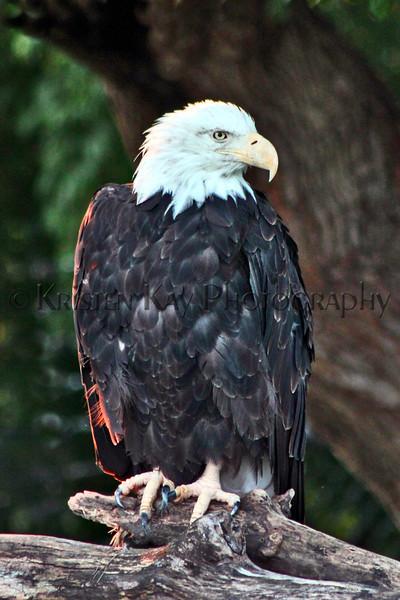 Eagle zoo_006zhscms