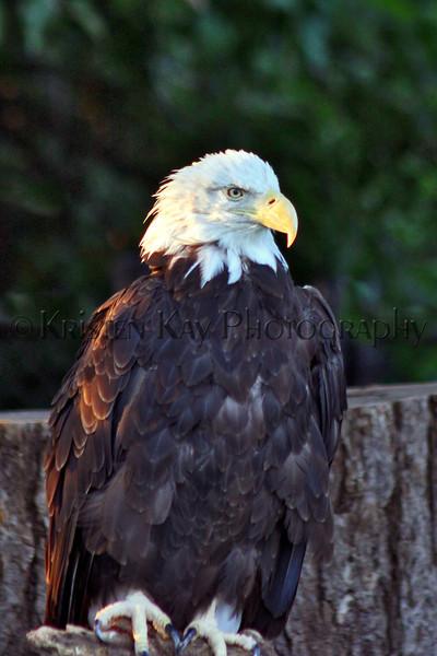 Eagle zoo_003hsms2