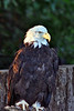 Eagle zoo_003hsms2