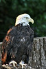 Eagle zoo_005hsms