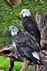 Eagle zoo_007hsms2