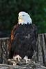 Eagle zoo_001hspems