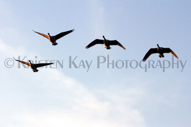 birds in flight 8-12