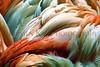 flamingo feathers_012