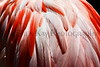 flamingo feathers_010