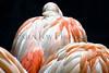 flamingo feathers_011
