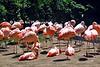 flamingo flock_012