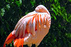 flamingo nesting necks_005
