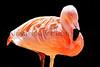 flamingo solo_002