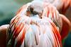 flamingo nesting necks_001