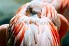 flamingo nesting necks_001