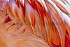 flamingo feathers_009