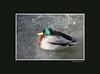 duckice_007blk