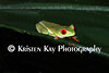 red-eyed tree frog_008