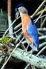 bird A CR_002